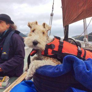 Sea dog, Caledonian Canal